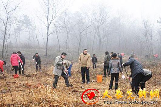 天长市汊涧镇组织全体机关工作人员义务植树